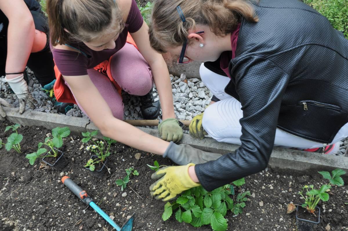 """Schüler der NMS beim Anpflanzen der """"Biodiversität im Garten"""""""